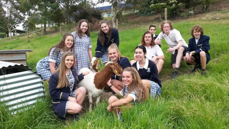 Mt Lilydale College Young Farmers with one of the goats
