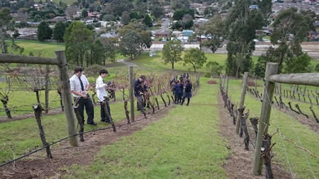 Mt Lilydale College Young Farmers at work in the vineyard