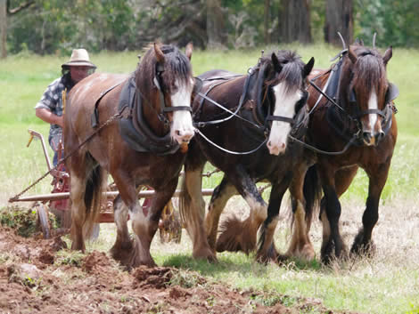 Heritage Draught Horse Club demonstrations
