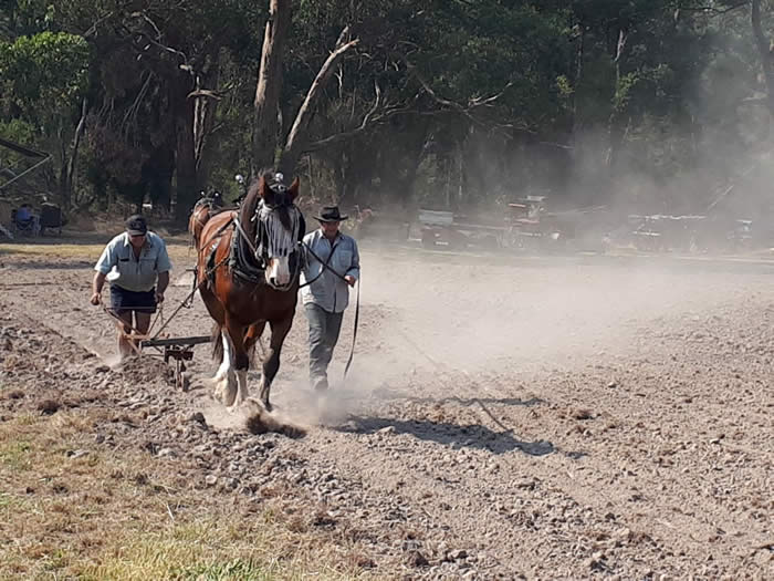 Heritage Draught Horse Club ploughing